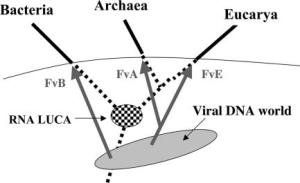 De drie virussen, drie domeinen theorie