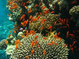 gezond koraal