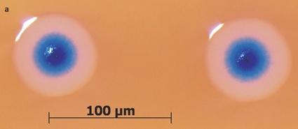 mycoplasma mycoides