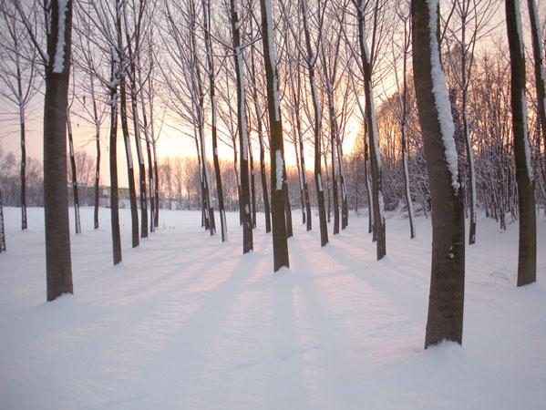 populieren met zon en sneeuw