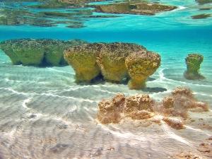 levende stromatolieten