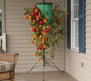upside down tomato