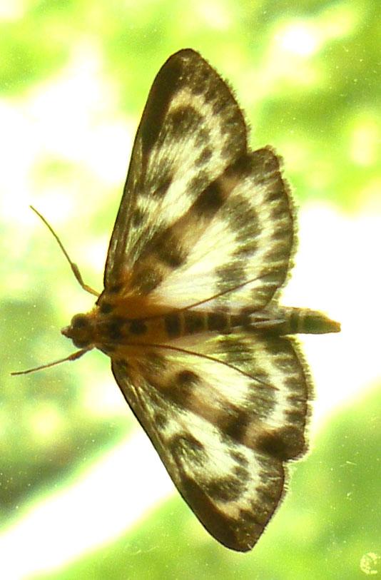 vlindermotje2