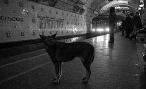 Metrohond wachtend op de metro
