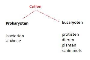 Eukaryoten-Prokaryoten