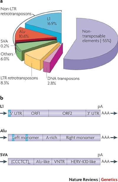 taart retrotransosons