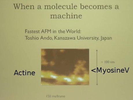 Myosine V (geel driehoekje rechts) loopt op actine (gele draad over de breedte onderaan de foto)
