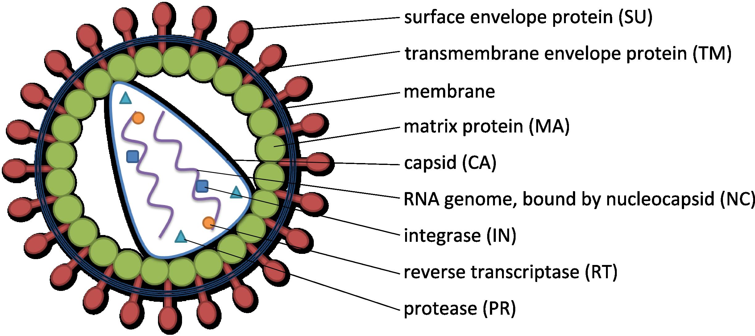 Virus Tsjok S Blog