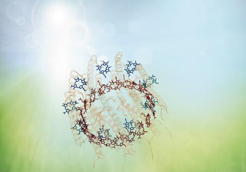 Een artistieke weergave van het Light-harvesting complex van de purple bacteria