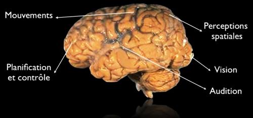 brain_7